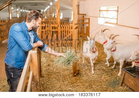 Handsome farmer feeding goats with hay at the barn