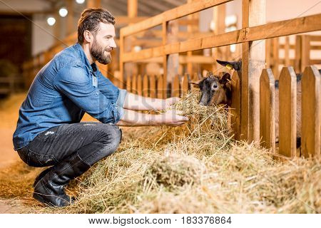 Handsome farmer in working clothes feeding goats with hay in the barn