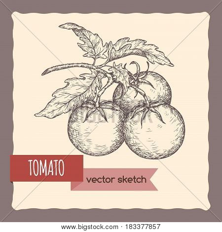 Fresh tomatoes on a branch hand drawn sketch. Great for farming and agricultural design.