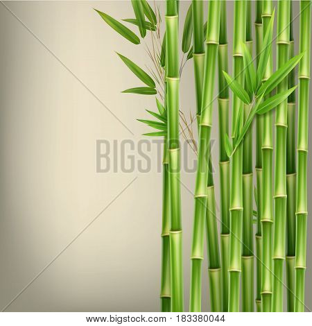 Vector green bamboo stems and leaves isolated on beige background with copy space
