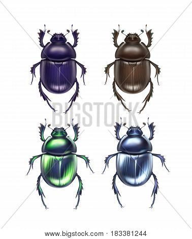 Vector set of different dark blue, brown, green shiny dung beetles Scarabaeus Sacer and Trypocopris vernalis close up top view isolated on white background