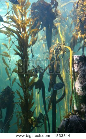 Seaweed Forest