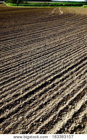 Ploughed and tilled soil with distant hedgerow.