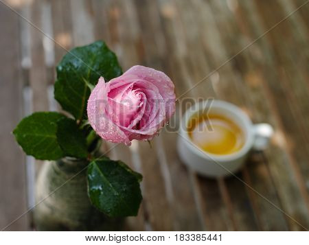 Wet Pink rose with blurry cup of jasmine tea in the background on a wooden table in garden