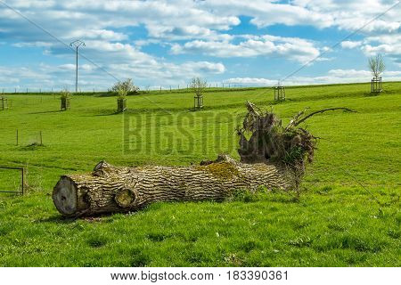 Enormous Big Tree Trunk On The Floor Of A Farm Meadow With Big Blue Cloudy Sky