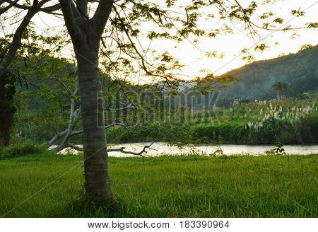 tree and grass field near river on sunset