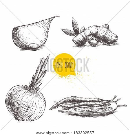 Hand drawn sketch style set illustration of different spices isolated on white background. Garlic clove ginger root onion and chili peppers.
