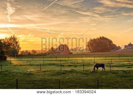 Horse grazing on a foggy morning at sunrise in orange sunbeams in rural landscape. Peaceful scene. Kortanaken Flanders Belgium Europe