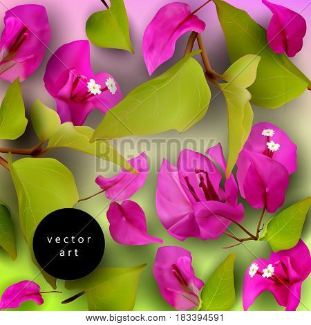 Summer or spring background with purple tropical flowers, fallen petals and leaves on a black and white striped background. Realistic plants. Bougainvillea. Vector illustration