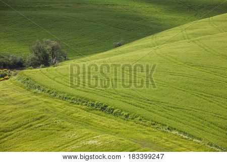 Hill in Val d'Orcia in Tuscany, Italy