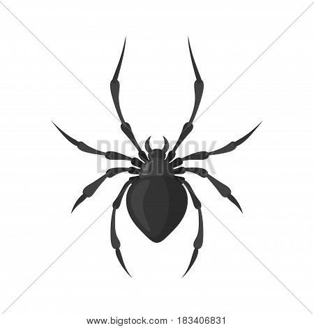 Spider vector illustration in a flat style. A poisonous and dangerous arthropodic insect. Cartoon black scary spider isolated on white background.
