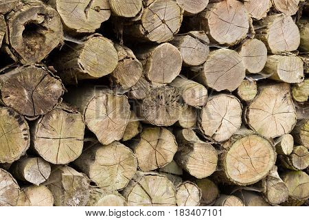 Detail Of A Lot Of Round Logs - Wooden Abstract Background. Outdoor Rack With Firewood Logs.