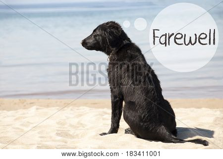 Speech Balloon With English Text Farewell. Flat Coated Retriever Dog At Sandy Beach. Ocean And Water In The Background