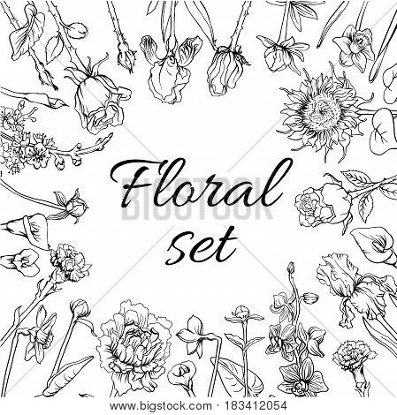 Vintage monochrome blossom flowers set with calla sunflower iris narcissus peony orchid and apple tree branch vector illustration