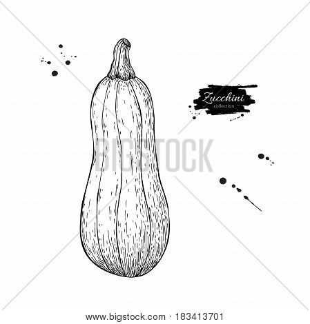 Zucchini hand drawn vector illustration. Isolated Vegetable engraved style object. Detailed vegetarian food drawing. Farm market product. Great for menu, label, icon