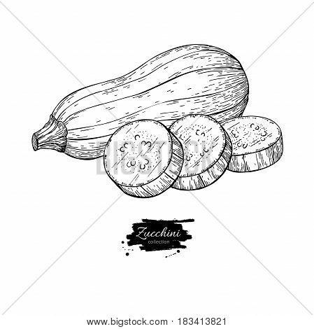 Zucchini hand drawn vector illustration. Isolated Vegetable engraved style object with sliced pieces. Detailed vegetarian food drawing. Farm market product. Great for menu, label, icon