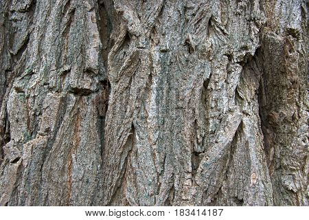 Shaes of grey and brown on a tree trunk