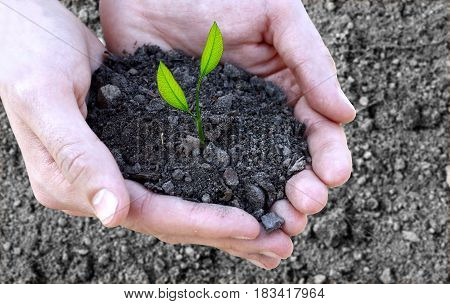 Concept Of Fertility And Ecology. Close Up Of Hands Holding Small Plant In Soil  Over Black Ground B