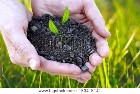 Concept Of Fertility And Ecology. Close Up Of Hands Holding Small Plant In Soil Over Green Bright Vi