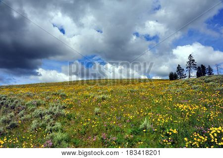 Alpine Meadow And Storm Clouds