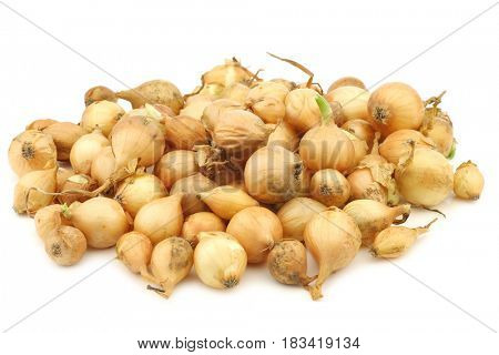 fresh brown seed onions on a white background