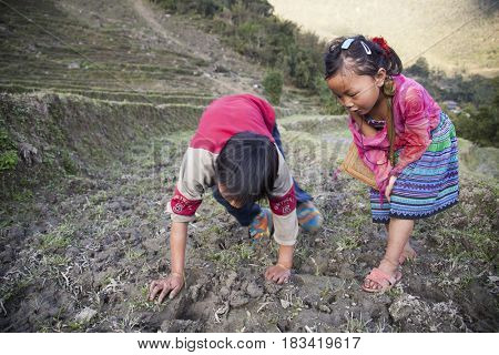 Sa Pa, Vietnam - 14 March, 2017: Unidentified ethnic Hmong minority kids playing on rice terraces in the rural area of Sa Pa, Northern Vietnam, near the border with China.