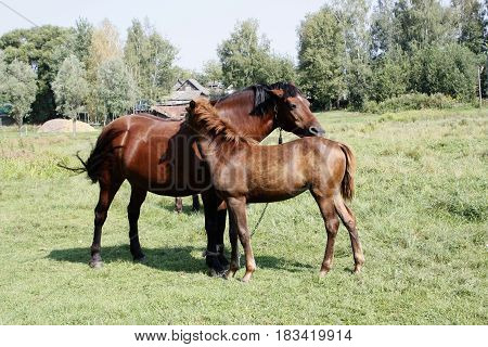A baby and adult horses. Animals. Nature.