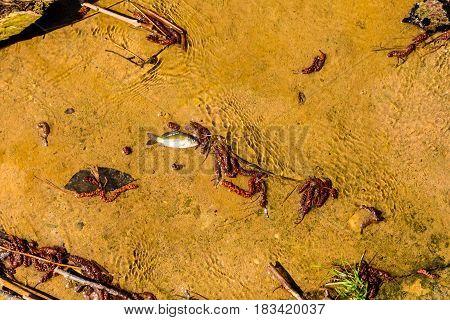 Dead Fish In Water