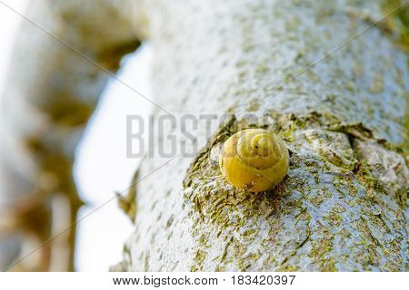 Yellow Snail On The Tree