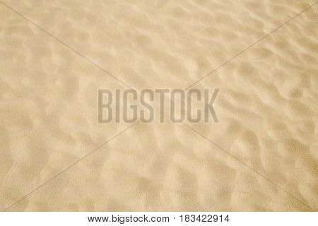 Sand beach surface close up as background