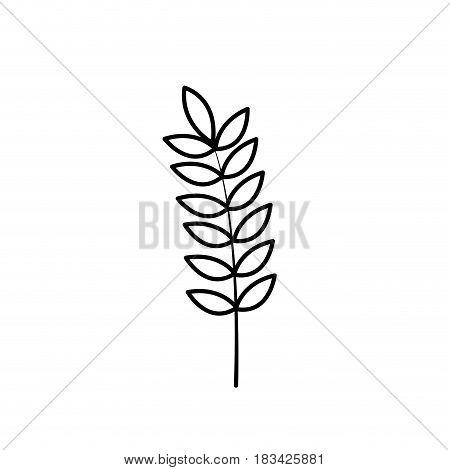 line healthy wheat organ plant nutricious, vector illustration