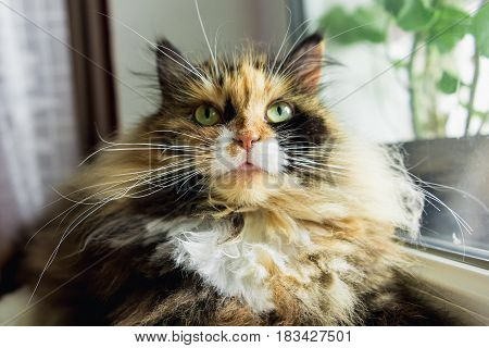 Fluffy cat with green eyes on the window