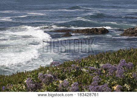 Landscape and Ocean views of La Jolla California in San Diego