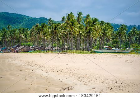 Palm Trees on Nacpan Beach on Sunny Day. El Nido, Palawan, Philippines.