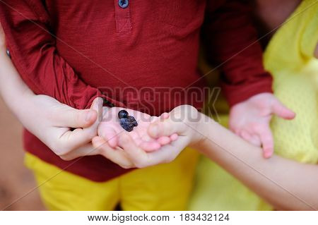 Female Farmer And Her Little Helper Working In Olive Grove In Italy. Closeup Photo Of Hands With Oli