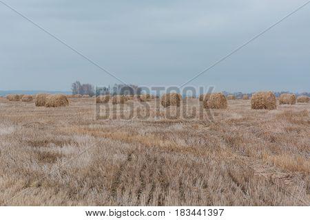 Dry Grass. Autumn Wood.