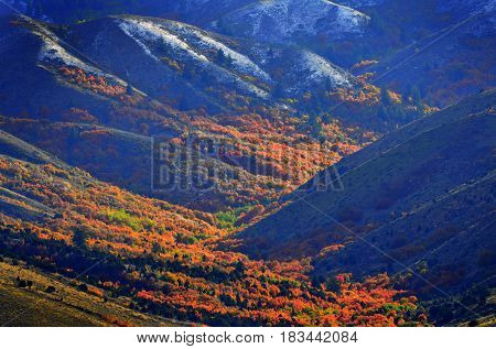 Mountainside with red leaves in Autumn