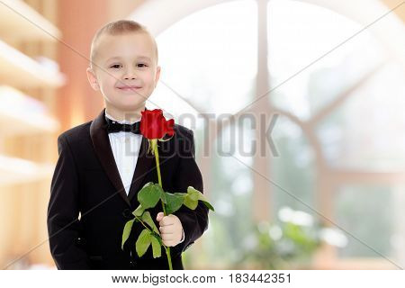 Beautiful little boy in a strict black suit , white shirt and tie.Boy holding a flower of a red rose on a long stem.In a room with a large semi-circular window.