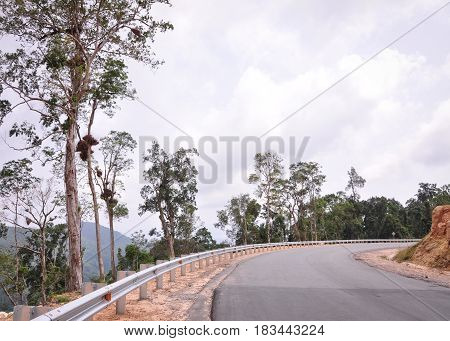 Mountain Road With Green Forest