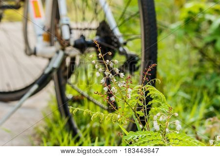 Roadside flowers have bicycles in the background.