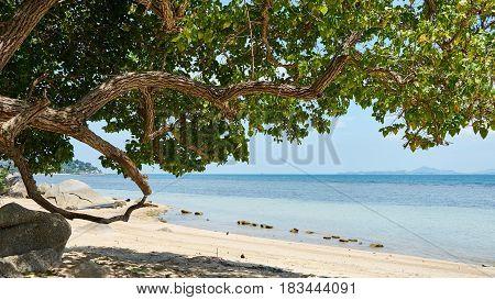 Beautiful Tree On A Beach