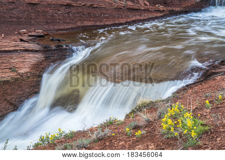 waterfalls in Park Creek at northern Colorado foothills, spring scenery with yellow wildflowers (mountain goldenbanner)