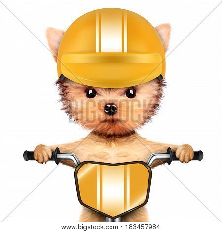 Funny adorable puppy sitting on a bike with yellow helmet, isolated on white. Delivery concept. Realistic 3D illustration of yorkshire terrier with clipping path