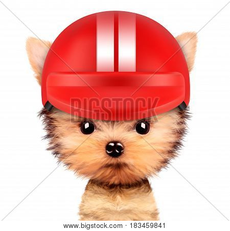 Funny racer dog wearing red helmet, isolated on white background. Sport and championship concept. Realistic 3D illustration of yorkshire terrier with clipping path