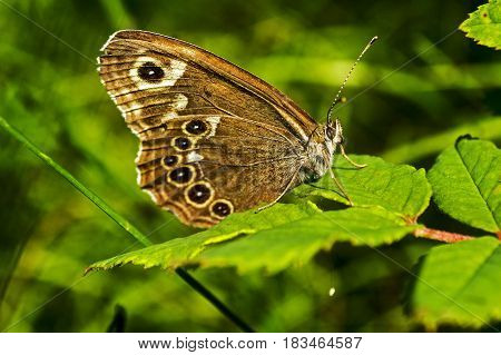 A beautiful butterfly in summer. Beautiful butterfly sitting on green grass field with flowers.
