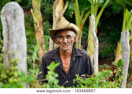 LAS CUEVAS SANTIAGO DE CUBA CUBA - NOVEMBER 25: Cuban farmer relating to the cultivation of banana trees in the mountains Sierra Maestra on Cuba Las Cuevas in November 25 2016