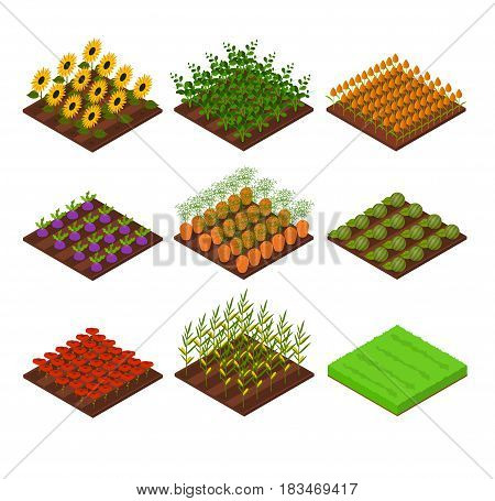 Farm Set Isometric View Bed Basic Element Agriculture with Flowers, Vegetables and Grass for Web, App. Vector illustration
