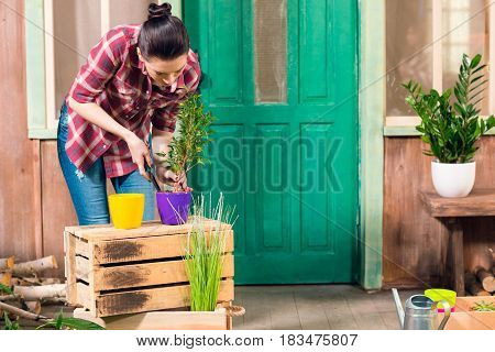 Brunette Young Woman Cultivated Plant In Pot While Standing On Porch
