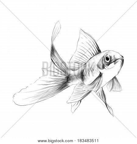 goldfish sketch vector graphics black and white drawing