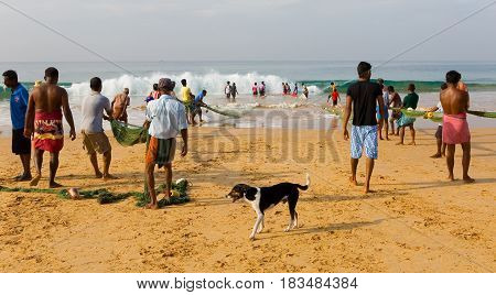 Hikkaduwa Sri Lanka December 26 2015: People are hauling a fishing net from the ocean to the shore.